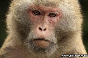 monkey aids