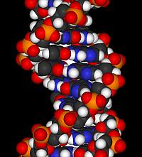 DNAFragment_WMC_200