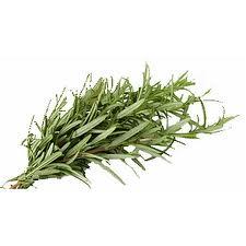 Essiac tea herb