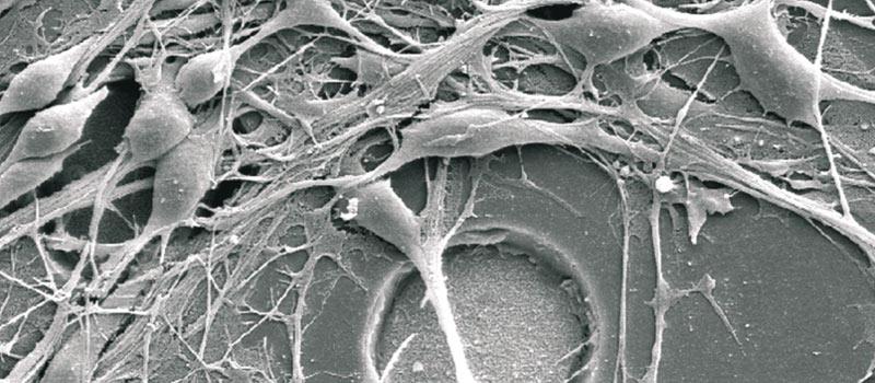neuroni_big