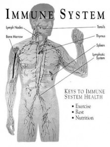 Immune-Function